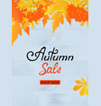 autumn sale poster design with yellowed leaves and vector image