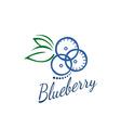 logo blueberry vector image vector image