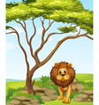 A lion under a tall tree vector image vector image