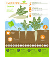 daikon beneficial features graphic template vector image vector image