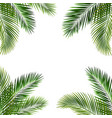 frame with palm leaf isolated white background vector image vector image