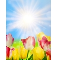 Colorful spring flowers tulips EPS 10 vector image