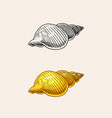 sea shell or mollusca different forms engraved vector image vector image