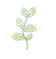 silhouette basil plant ingredient to condiment of vector image vector image