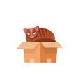 cat in box cat in a cardboard box kitty vector image