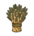sheaf of wheat colorful flat vector image