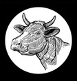 cows head hand drawn in a graphic style isolated vector image
