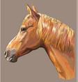 colorful horse portrait-9 vector image vector image