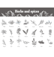 Herbs and spices set Hand drawn officinale vector image vector image