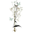 plants silhouettes on white background vector image vector image