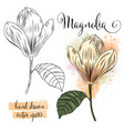 botanical art watercolor magnolia flower vector image vector image