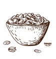 hand drawn pistachio nuts in bowl vector image vector image