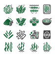 seaweed icon vector image