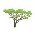 tree in the savannahafrican safari single icon in vector image