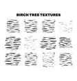 birch tree bark stains material collection vector image