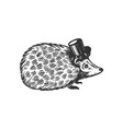 hedgehog animal in cylinder top hat engraving vector image vector image