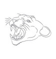 portrait of a cougar drawing lines vector image vector image