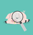 sick pig swine flu with magnifying glass vector image vector image
