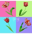 Background with tulips3-01 vector image vector image