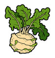 color colorful vegetables kohlrabi vector image vector image