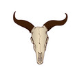 cow or bull skull isolated vector image