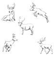 Deer sketch Pencil drawing by hand vector image vector image