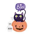 happy halloween skulls black cat inside pumpkin vector image vector image