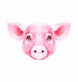 polygonal of pig vector image