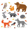 set forest woodland animals isolated vector image
