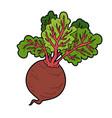 color vegetables beet vector image vector image