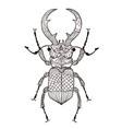 coloring page with beetle deer graphics vector image