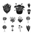 a bouquet of fresh flowers black icons in set vector image vector image