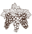 bunch grapes sketch style vector image
