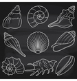 Chalkboard Seashells Set vector image