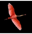 pink Flamingos vector image vector image