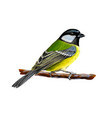 portrait a tit bird sitting on a branch on vector image