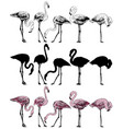 set of flamingo on a white background vector image