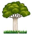 Single tree vector image vector image
