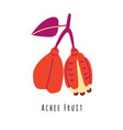 achee fruit flat vector image vector image