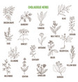cholagogue herbs hand drawn set vector image vector image