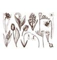 botanical springtime plants vector image