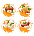 nuts in caramel or honey splashes set vector image vector image