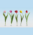 set tulip flowers vector image vector image