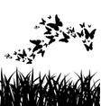 silhouette grass and flying butterflies vector image