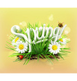Spring time for a picnic grass flowers of camomile vector image