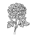 chrysanthemum black and white vector image vector image