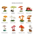 Inedible mushrooms set of icons isolated on vector image