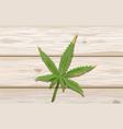 single cannabis leaf on wood background hemp vector image vector image