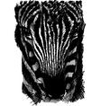 Sketch of a zebra head vector image vector image