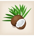 Whole and half coconut with leaves vector image